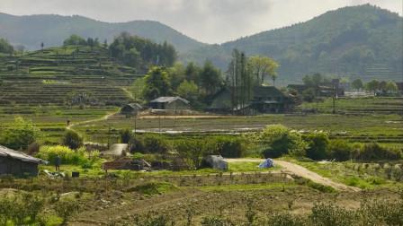 《藏区蜀地》43、走进章腊藏寨,房子都是政府送的
