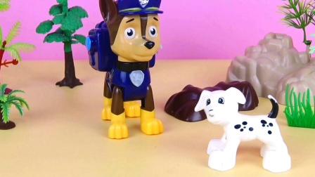 阿奇和天天帮小斑点狗实现愿望啦