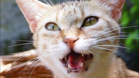 小橘猫怎么就那么喜欢睡碗里呢?
