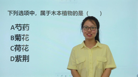 """公务员考试:""""芍药菊花荷花紫荆"""",属于木本植物的是哪个?"""