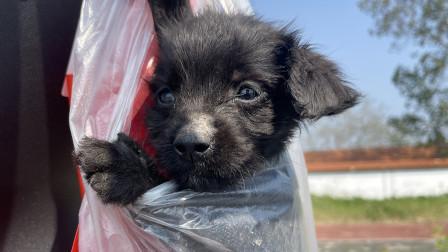 大齐赶海,又捡到一只可爱的小黑流浪狗,准备带回家养一下