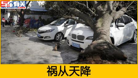 车被树砸了要找谁赔,保险公司给赔吗?说天灾不赔怎么办?