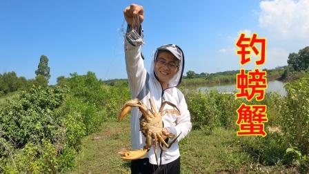 220买15个钓笼抓螃蟹,不料第一只螃蟹就回本,血赚啊!