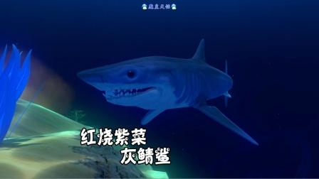 天铭 海底大猎杀 第三季 65 红烧紫菜灰鲭鲨,来一口尝尝吧!