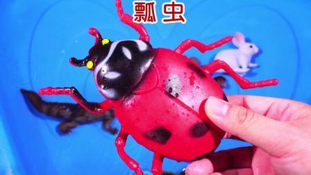 一起认识旗鱼鲸鲨蚂蚁等动物吧