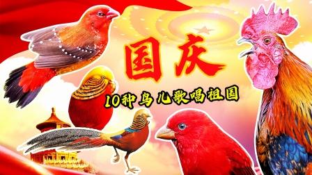 国内10种红色的鸟,欢唱国庆,最美中国红!
