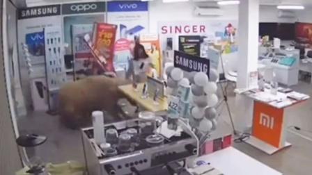 大黄牛突然冲破玻璃门闯进手机店,女子躲避不及被撞翻