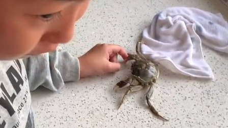 10岁男孩被螃蟹夹手却不愿伤害螃蟹:它冷静下来就放手了