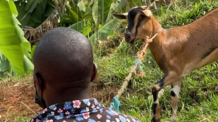 非洲农场周末聚会,农村买只羊,不比首都便宜