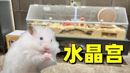 小伙耗时一个月,为仓鼠打造超豪华水晶宫仓鼠笼!猫:自助餐厅?