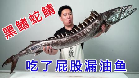 试吃超大的黑鳍蛇鲭,又丑又凶猛,吃了还屁股漏油