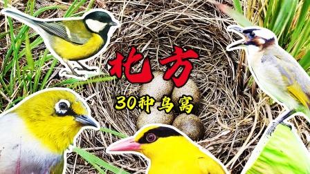 30种北方鸟窝,很多人听过这些鸟叫声,却没有见过它们的窝