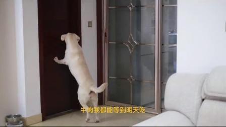 狗狗:铲屎的,你这样做也太不地道了吧!