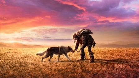 2万年前的人驯化狼,他们才是狗的祖先!