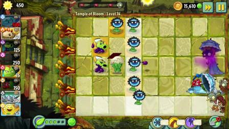 植物大战僵尸2:自选牌,强化我们的向日葵,还是有点打不过
