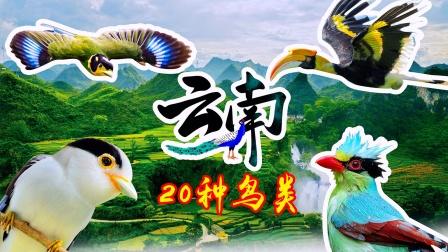 云南鸟类有哪些?20种鸟儿美丽得就像童话,让人过目难忘!