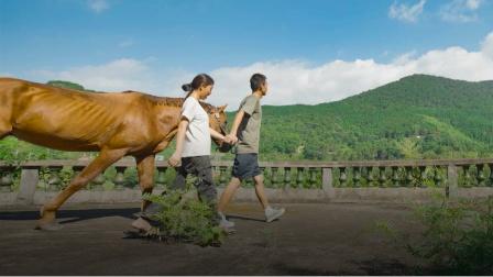 泉州夫妻花1年半骑马游中国:短暂的脱轨,长久的诗意