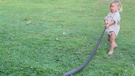 2岁男童单挑巨蟒抓蛇尾拖行 父亲全程目击喊加油