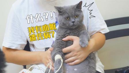 养了6年的猫,检查发现遗传病?