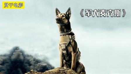 战功无数的军犬,竟被迫安乐死?《军犬麦克斯》