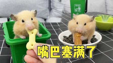 贪吃的小仓鼠吃饼干,嘴巴都塞不下了还要吃