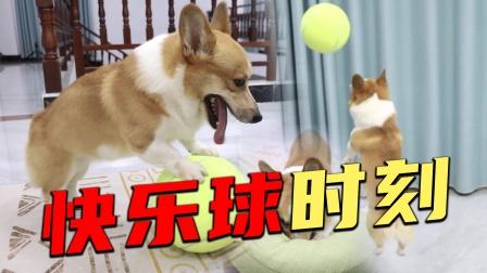狗狗成精了,听到主人说有新礼物后,狗子竟然懂把眼睛给捂起来?
