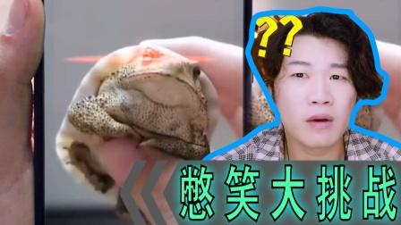 憋笑大挑战:这乌龟是什么品种?我从来没见过!