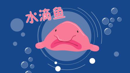 表情最忧伤的鱼是什么鱼