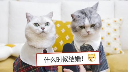 花花与三猫什么时候结婚?读评论#1