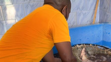 我在非洲养鱼,因在卢旺达,活的罗非鱼特别贵