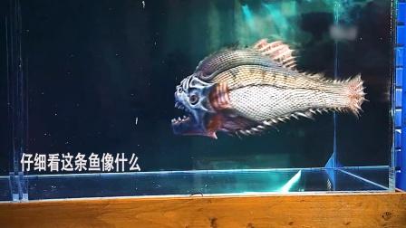 食人鱼30D:仔细看这条鱼像什么?②