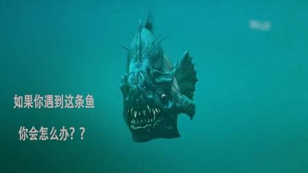食人鱼30D:如果你遇到这条鱼,你会怎么办?③