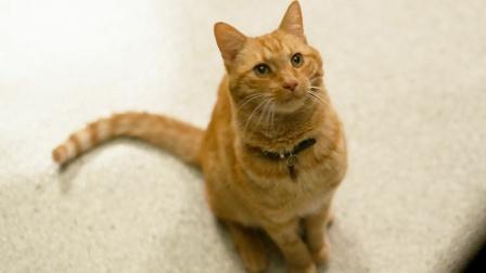 你是不是最可爱的小猫咪?不,你是噬元兽!