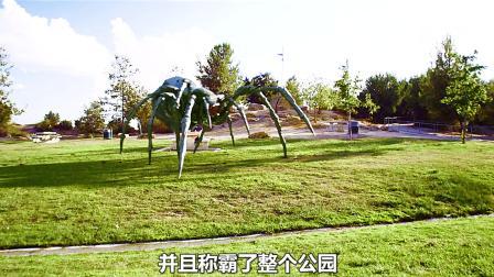 这蜘蛛大不大?