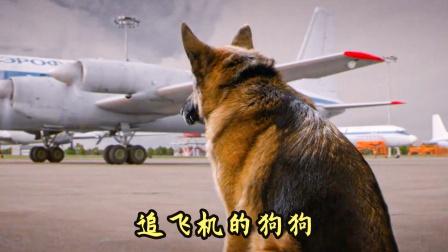 主人坐飞机离开,狗狗每天追赶飞机寻找主人,感人动物电影