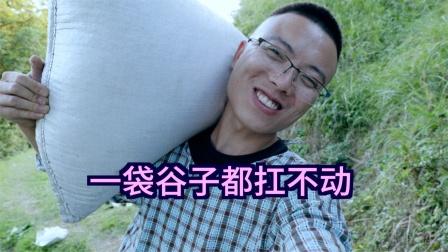 贵州山区种谷子太辛苦了,一袋谷子扛回家走一小时,没马路太累了