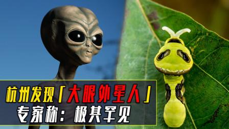 """杭州发现""""大眼外星人"""",能模仿多种生物,专家:极其罕见"""
