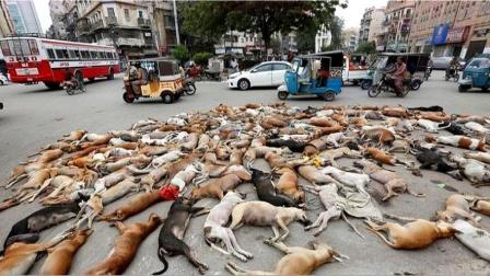国外街头惊现上千只死狗,得知真实原因之后,路人都无言以对