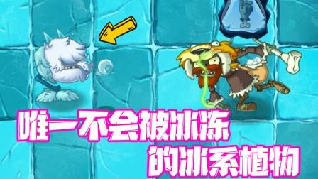植物大战僵尸:唯一不会被冰冻的冰系植物!小蛙说的!