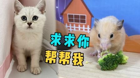 小猫咪为了不去打针,求小仓鼠帮忙躲起来