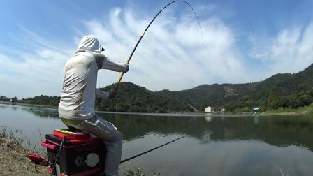 接窝钓鱼,目标鱼青鱼,结果被草鱼闹