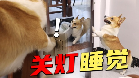 狗狗成精了,被主人叫回房间后,狗子竟然跳上床来帮忙关灯?