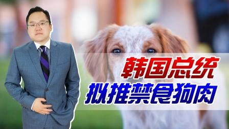 禁止吃狗肉?韩国自古就有吃狗肉习俗,如今为何要违背祖宗的决定
