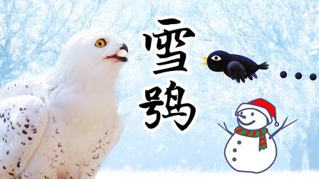 搞笑四川方言配音:乌鸦向雪鸮表白,这事成了吗?