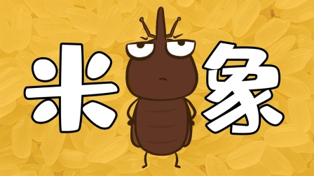 大米里的黑色小虫子,是从哪里冒出来的?
