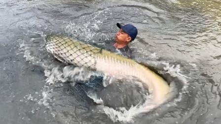 捕捉到一条大鱼,看这条鱼有多大,男人都抓不了它