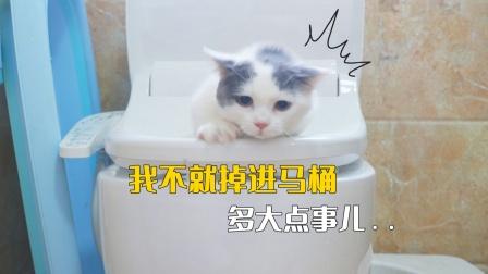 小奶猫不小心掉进马桶,迎来第一次洗澡