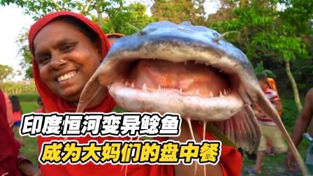 印度变异超级鲶鱼,靠恒河水长到200斤,结果成为大妈盘中餐
