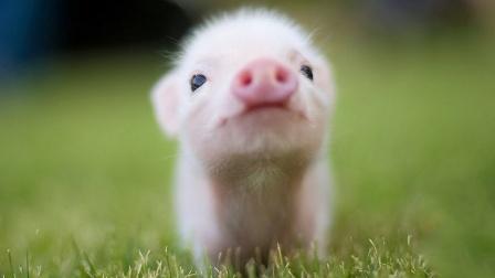 世界上可爱的动物宝宝,呆萌呆萌的,你最喜欢养哪一个?