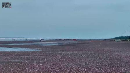 赶海市民拍到台风过后的海滩,到处都是钉螺,网友一看急坏了
